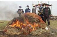 মনপুরায় বিপুল পরিমাণ অবৈধ বেহুন্দি জাল পোড়াল কোস্টগার্ড