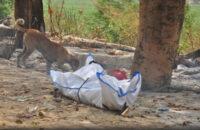 দিল্লির শ্মশানে লাশ নিয়ে হাহাকার, মরদেহ ছিঁড়ে খাচ্ছে কুকুর